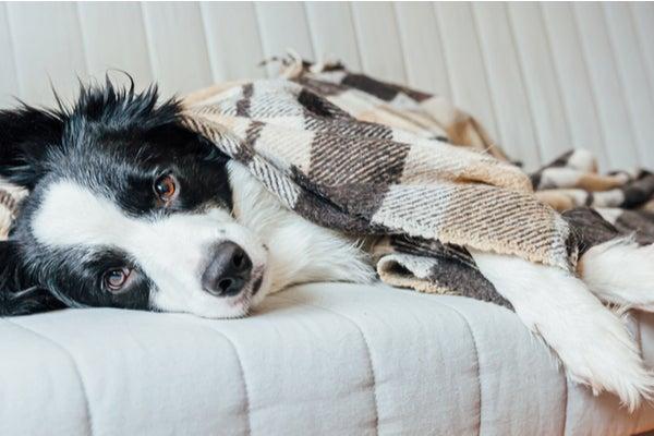 winter-dog.jpg
